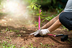 Gloved hands planting a tree in soil, tree planting is the #1 solution to climate crisis