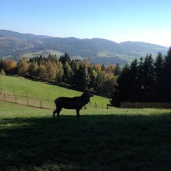 Bayerischer Wald Wandern
