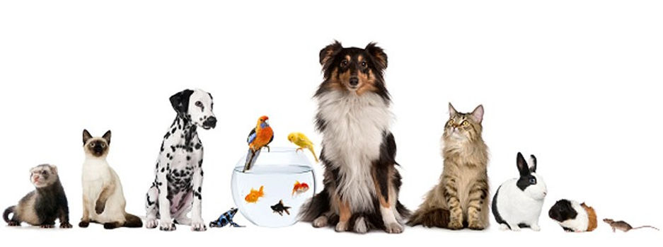 Cumbrian Tails Pet Services, ensuring the welfare and safety of your pets, when you need it most
