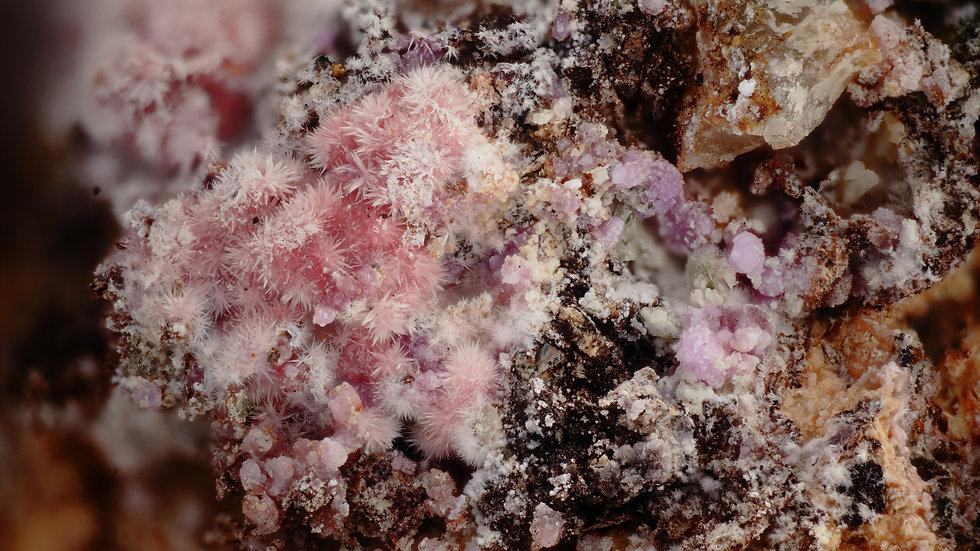 Picropharmacolite Hornesite Sainfeldite - Mechoui - Maroc
