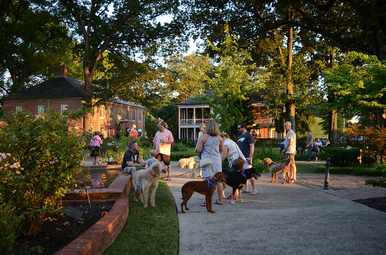 People stand around on a summer day, each holding a dog on leash.