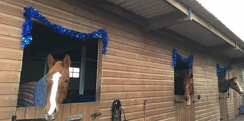 Hesteyri Horse Yard_edited.jpg