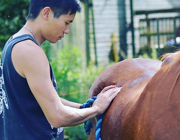 Treating Horse.jpg