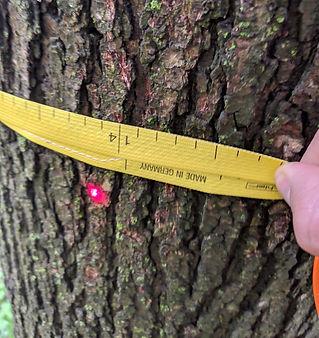 Tree Surveys Northern Virginia