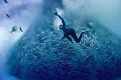 Filmes_Programa_0005_triste oceano 3.jpg