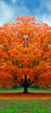 alberoautunno.jpg