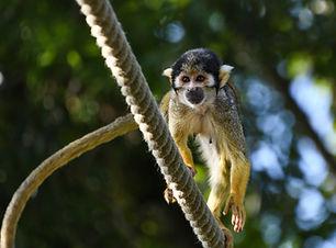 monkey-2661695_1920.jpg