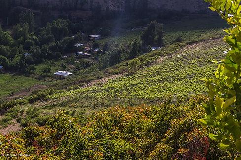 Ecocentro La Ortiga-54.jpg