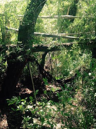 Árboles y río en ecocentro