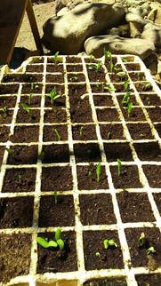 Cultivos orgánicos Ecocentro