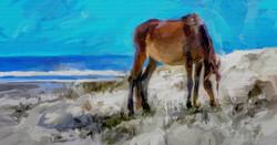 Cumberland Pony