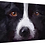 "Thumbnail: ""The Border Collie Stare"" 16x12"" Canvas Hand Signed"