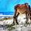 "Thumbnail: ""Cumberland Pony"" 24x13 Gallery Wrap Canvas"