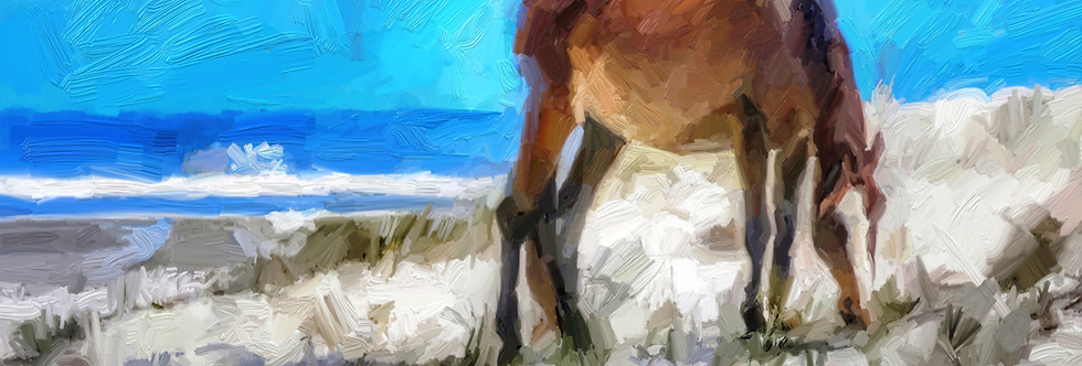 """Cumberland Pony"" 24x13 Gallery Wrap Canvas"
