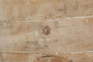 Fond bois.jpg