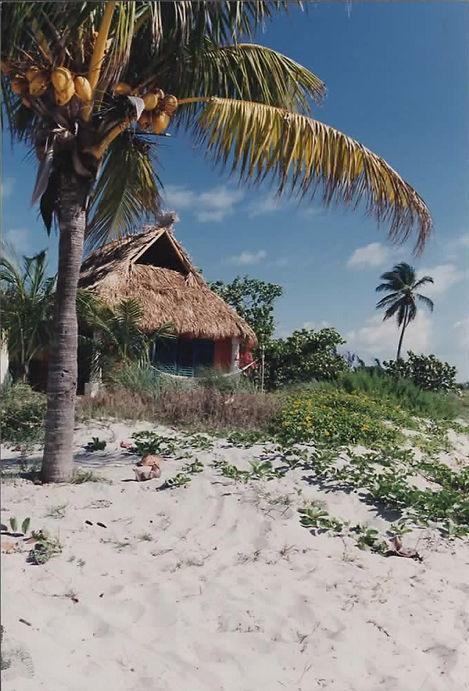 paradise 4.jpg