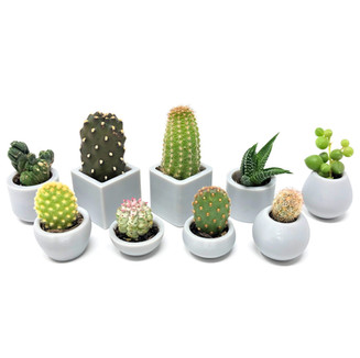 Small volume production (usually 1 to 1000 copies) to verify concept & test product-market fit. We can also design & manufacture custom 3D printed business cards ranging from cute little planters or miniatures to practical things like door stoppers or soap dishes.