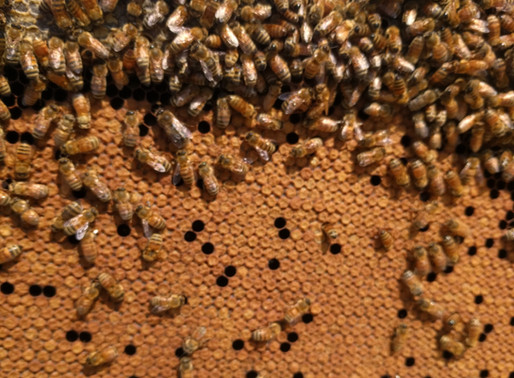 Follow Homer's Beekeeping! June 2020