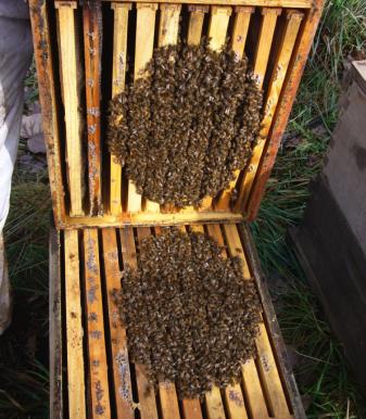 Follow Homer's Beekeeping! November 2020