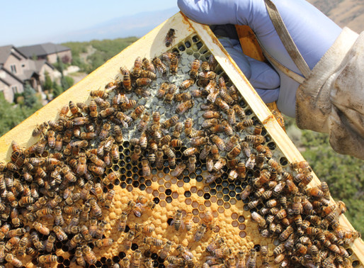 Follow Homer's Beekeeping! July 2020