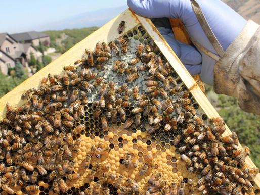 Follow Homer's Beekeeping! July 2020