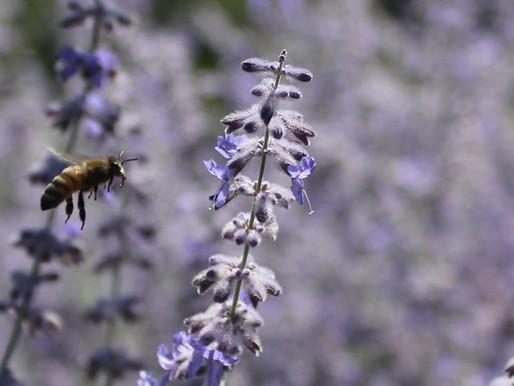 Follow Homer's Beekeeping - April