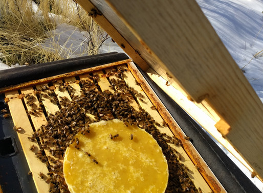 Follow Homer's Beekeeping! What I am doing in my hives, January 2020