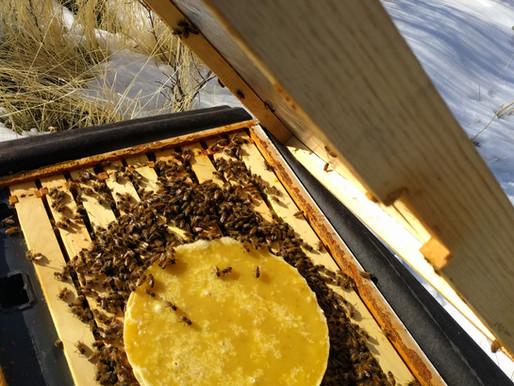 """""""Bee Beanie"""" Winter feeding inner cover!"""