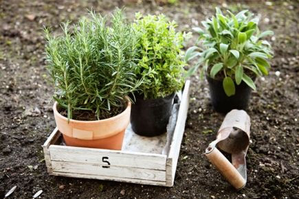 A Foodie's Guide to Gardening: What to Plant this Spring