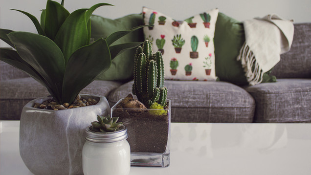 Why indoor plants offer us more than just aesthetic improvement
