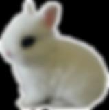 enano holandes anteojos conejos peru 928
