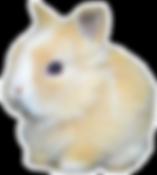 Minileon Gold Dutch conejosperu.com 9280