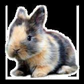 harlequin conejosperu parte 2.png
