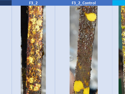 SeaSnake project - Antifouling promising results
