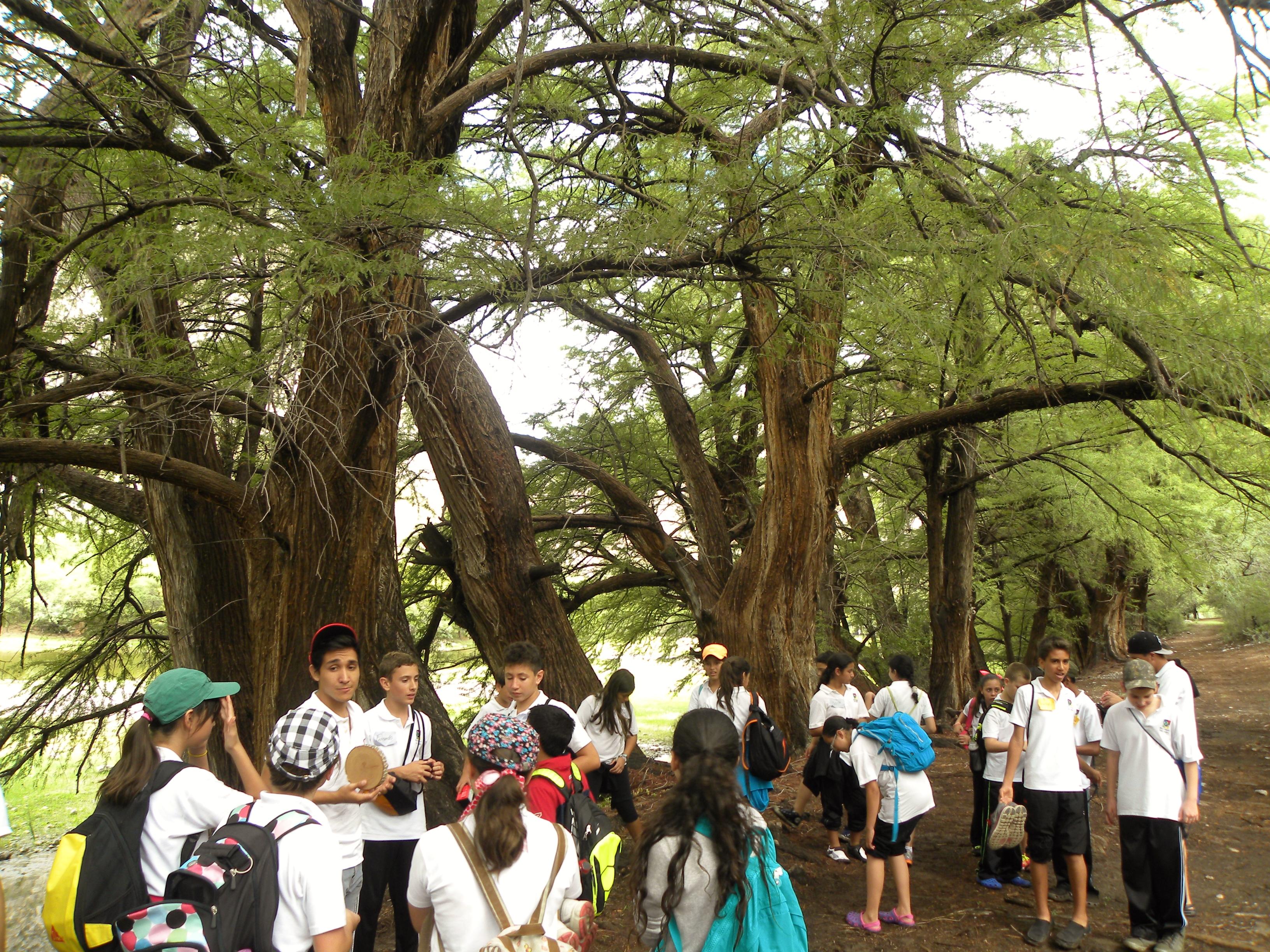 TIII Excursiones (21)