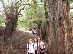 TIII Excursiones (15)