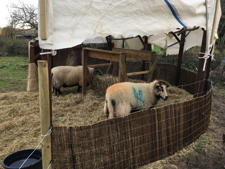 Sheep shelter finished... and Brian tamed!