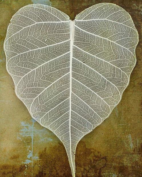 Spiritual heart.jpg