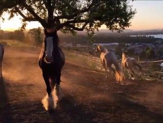 Zwischen Himmel & Herde... ein Tag der ACHTSAMKEIT mit den Mearas...