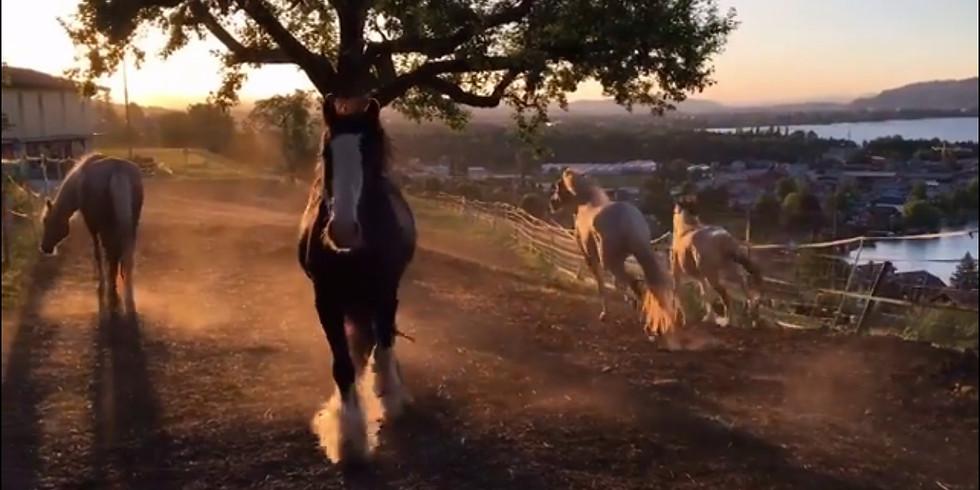 Zwischen Himmel & Herde... ein Tag der ACHTSAMKEIT mit den Mearas