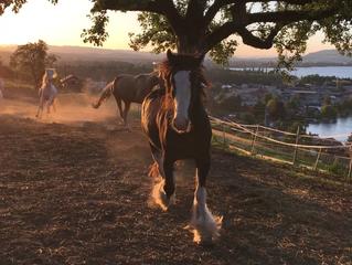 Sonne... Mond & Pferde mit der Herde der Mearas