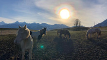 Genehmigung des Vereins *Zwischen Himmel & Herde* mit...