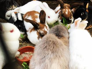 Herr und Frau Karotte🥕🥕... & die Glück*liche BunnyBande