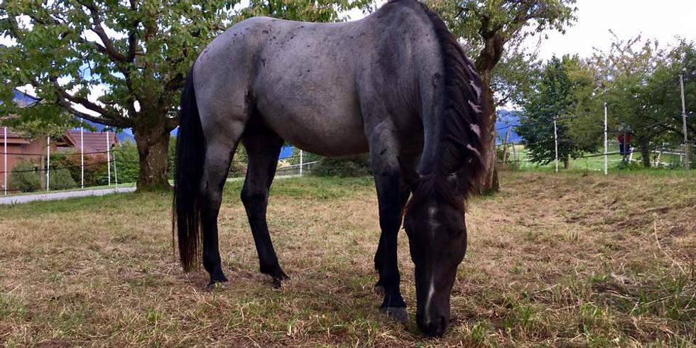 Zwischen Himmel & Herde... das Pferd & Co als KraftTier... schamanische Reisen mit den Mearas
