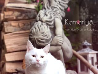😻Ich bin Kamariyâ... von den DrachenKatzen...