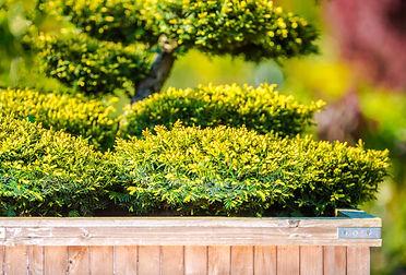 home-garden-tree-decoration-PCMAXPW.jpg