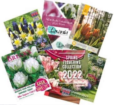 Shop catalogs now for the best selection of spring 2022 bulbs.jpeg