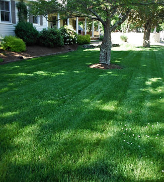 Set your summer mowing height to three i