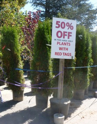August is when garden centers lower prices, but inspect pot-bound plants carefully.jpeg