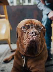 dog wearing eyeglasses_edited.jpg